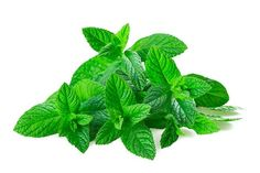 Peppermint essential oils is very energizing. Here are 5 ways to use peppermint essential oil to boost energy. Healthy Drinks, Healthy Tips, Healthy Foods, Fitness Apps, Peppermint Plants, Salud Natural, All Vegetables, Herbal Medicine, Herbalism