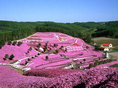 Hitsujiyama Park - Google Search