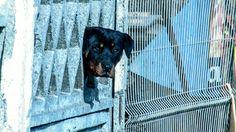 Dog by laurflesh on 500px