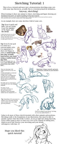 Adult Drawing of Cats