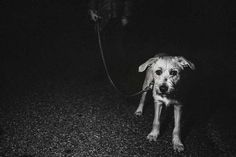 2. Al adoptar un perro de rescate estarás ahorrando dinero. Rescatar un perro, en la mayoría de los casos, será más barato que elegirlo de una tienda de mascotas. Además, la mayoría ya están esterilizados y con sus vacunas al día.