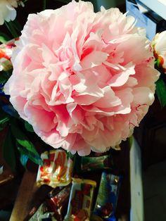 So sweet, so #beautiful #... #peony #freddi #pink #