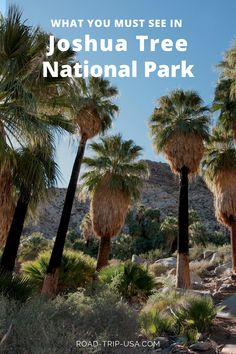 This road trip through Joshua Tree National Park will show you how to see all of the highlights in one day. The driving itinerary begins at the north entrance and stops at all o the must see attractions in the park finishing up at the south entrance. Joshua Tree National Park, National Parks, California Attractions, 7 Places, My Road Trip, Top Destinations, Travel Pictures, Travel Inspiration, Things To Do