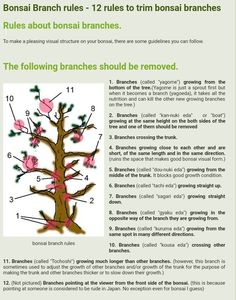 Rules to prune branches