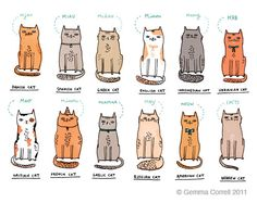 gemma correll and her merry band of misfits: miau miaow miauw