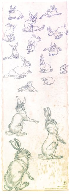 Looks like Clair Wendling studies!  (Rabbits sketches by ~SpIgHy on deviantART)