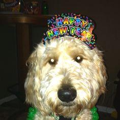 Sadie- Happy New Year!