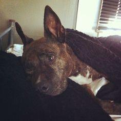 Ik ben een echte dieren liefhebber! Ik heb zelf ook een hond! Haar naam is Vita.