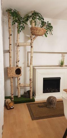 Cat Litter Box Diy, Cat Tree Designs, Diy Cat Tower, Cat Wall Shelves, Cool Cat Trees, Cat House Diy, Cat Room, Cat Decor, Space Cat