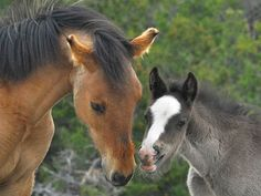 Family saves baby wild horse, forms 'amazing' bond - TODAY.com
