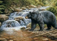 AMERICAN BLACK BEAR - Shadow of the Forest ~ © Rosemary Millette