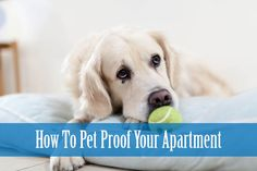 how to pet proof apartment