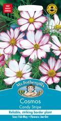 Mr Fothergills - Flower - Cosmos - Candy Stripe - 60 Seeds