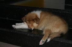 Akke ....rustig slapen...
