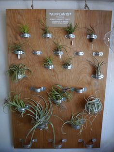 air plants DIY. Looks easy and awesome