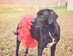 DIY Dog Tutu To expand to your cat hat making business...