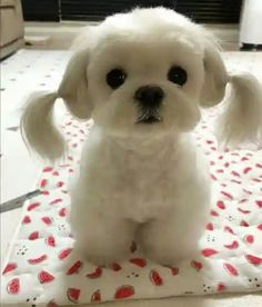 Cute Puppy Pictures You Will Love Tiny Puppies, Cute Dogs And Puppies, Baby Dogs, Doggies, Baby Animals Pictures, Cute Puppy Pictures, Animals And Pets, Cute Little Animals, Cute Funny Animals