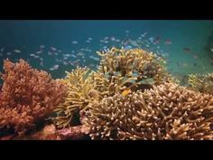Latest Taman Sari Pemuteran Bali News - http://bali-traveller.com/latest-taman-sari-pemuteran-bali-news/