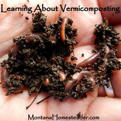 Learning About Vermicomposting - Montana Homesteader