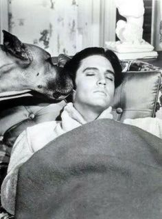 """Elvis in """"Live a Little, Love a Little."""" According to Priscilla, in spite of rumors that the dog was Elvis' Brutus, the dog in movie was professionally trained."""