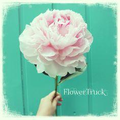 Gorgeous! #flowers #flowertruck #pink #love