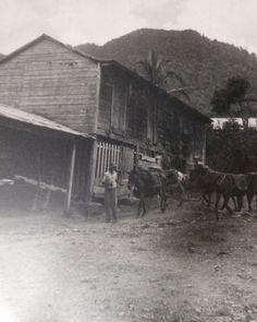 Hacienda Saliente, Picture From Hacienda San Pablo, Jayuya, Puerto Rico