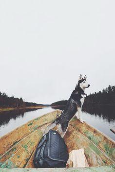 On the lookout   http://ift.tt/2foZQ1T via /r/dogpictures http://ift.tt/2eOjMyJ  #lovabledogsaroundtheworld