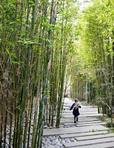 The property is divided into zones, including a shade garden with a meandering path of staggered concrete pavers flanked by bamboo. As this area is sloped, the designers created a swale effect with permeable river rocks on one side.