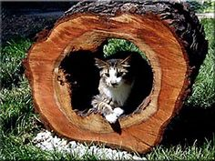 Outdoor Security Enclosure for Cats and small Pets! I want to make a patio piece like this. Feral Cat Shelter, Feral Cats, Cat Habitat, Animal Rescue League, Outdoor Cat Enclosure, Cat Run, Cat Tunnel, Cat Garden, Outdoor Cats