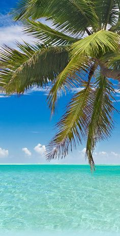 Cozumel, Mexico | What would you do with 8 hours in Cozumel? There are beaches for sunbathing and strolling, sailing adventures, glass-bottom boat tours, fishing charters, and world-class diving. And that's just the start. Cruise with Royal Caribbean to Cozumel, Mexico and enjoy a unique destination that packs a whole lot of adventure onto its shores.