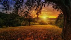 Morning landscape wallpaper