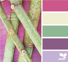 color stalks by design seeds