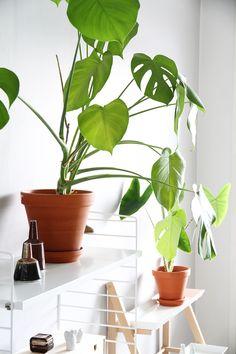 hunajaista olohuone sisustus kekkila Scandinavian Interior, Home And Living, Plant Leaves, Homes, Organic, Joy, Interior Design, Green, Painting