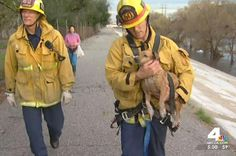 A dog was spotted struggling to keep his head above the water in the Los Angeles River.