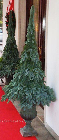 Fioreria Oltre/ Christmas trees  https://it.pinterest.com/fioreriaoltre/fioreria-oltre-christmas/
