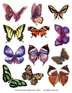 Lovely images of butterflies, great for altered art fairies or just add to your scrapbook!