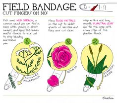 Field bandage using some common herbs. :)