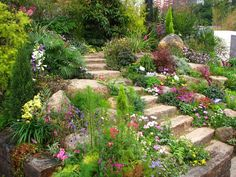 This is a slope that one might not notice, due to the skillful way that this was designed. Instead of terracing on either side of a straight set of steps, the slope was anchored with curving steps surrounded by boulders, conifers, and palms, along with deciduous shrubs and trees. Top that with a rainbow of floral delights and the slope fades from notice. The added extra is a very solid slope that will last for many years. ~EBM