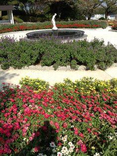 Twitter / MFujikasa: 花壇の花に囲まれた白い彫刻、いい感じです。 13.10.14 ...