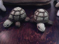Giant Tortoises for the Ark