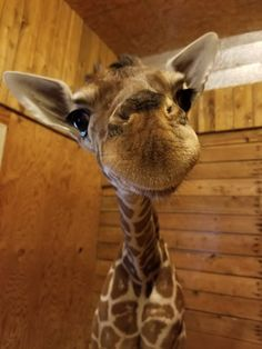 A collection of cute animals and stuff from around the web, they are all cute and they are all Wuvely Beautiful Creatures, Animals Beautiful, Farm Animals, Cute Animals, All Gods Creatures, Wild Creatures, Little Kittens, Pretty Baby, Zebras