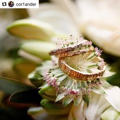 Happy to have made you these life journey compagnon ROCK rings. Hope they bring good luck happyness and fortune! 🤸🏻♀️ ***** Repost @cor1ander (@get_repost) ・・・ Our beauties, made by @liesbethbusmanjewelry. Picture by @mashabakkermatijevic #weddingring #marriage #jewelry #plants #isaidyes