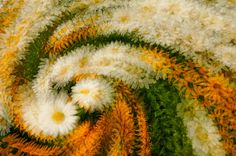 Nature+Photography | Abstract Nature Photography Online Class Announcement