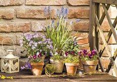 Výsledek obrázku pro jarní květiny květináče