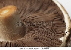 uncooked portobello mushroom, close up, horizontal - stock photo