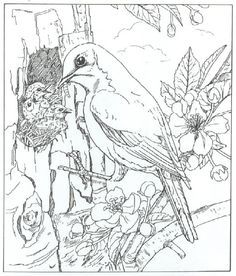 Realistic American Crow Coloring Page From Crows Category Select