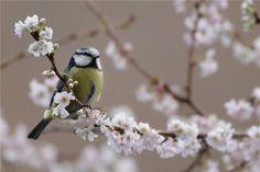 птицы весной: 23 тыс изображений найдено в Яндекс.Картинках
