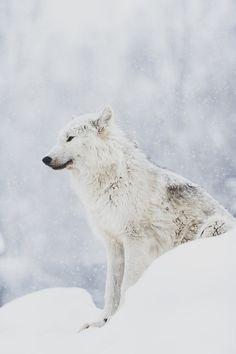 White as Snow byScott Denny