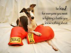 Be kind. #antoniotheitaliangreyhound