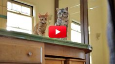 Cat and Kitten are back, and this time there's a new member of the household! Hear Cat's sage advice to his young counterpart about their new furry friend. Hilarious!